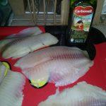 Se agrega aceite de oliva al pescado.